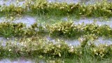 Pflanzen im Eigenbau